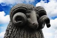 Moffat Ram